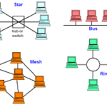 What are the types of Network Topology??